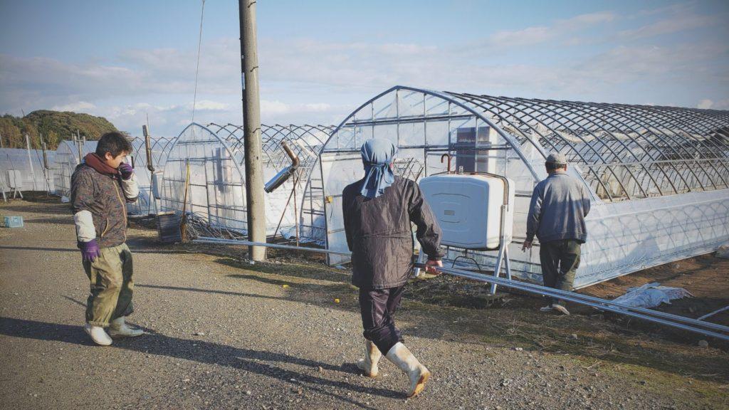 農業ハウスのビニールを張り替える準備の様子。社員で手分けしてパイプを移動中