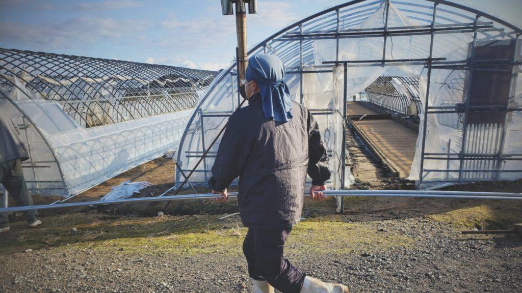 農業ハウスのビニールを張り替える準備の様子。社員で手分けしてパイプを移動中2